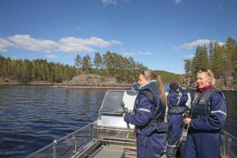 8 Valuable Lessons of Saimaa Ringed Seal in Linnansaari National Park | Live now – dream later travel blog